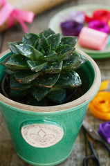 Stone rose in green pot, ribbons, wrappings and scissors