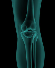 front x-ray view of human knee