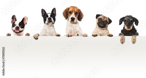 Fototapeta Fünf Hunde