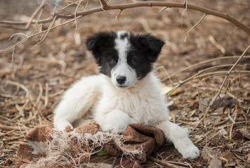 Portrait of adorable mixed breed stray puppy