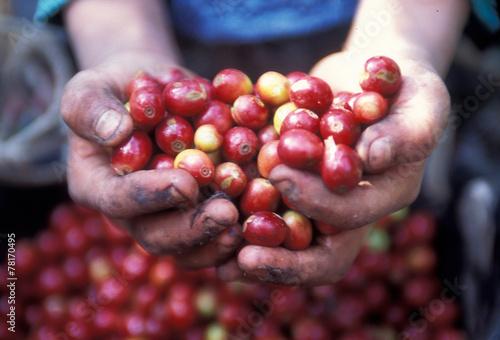 Fotobehang Centraal-Amerika Landen LATIN AMERICA GUATEMALA COFFEE