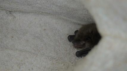 Bat hides and grins