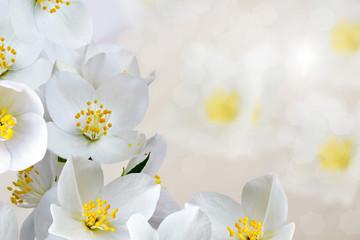 background of jasmine flowers