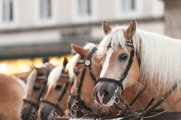 Horse-drawn carriage in the town square of Salzburg