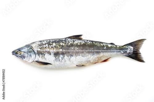 サクラマス masu salmon