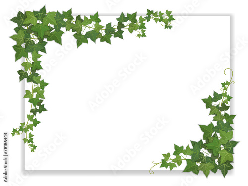 paper sheet decorated ivy - 78186443