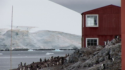 Gentoo Penguins at Chilean Base in Paradise Harbour, Antarctica