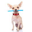 canvas print picture - toothbrush dog