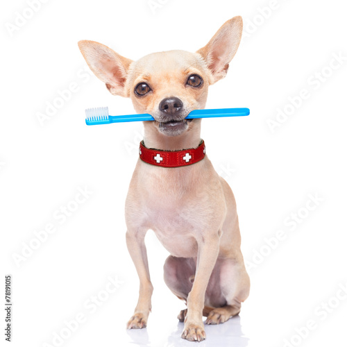 canvas print picture toothbrush dog