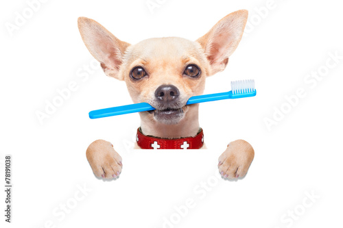 In de dag Wolf toothbrush dog