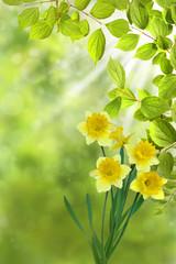 Frühling 329