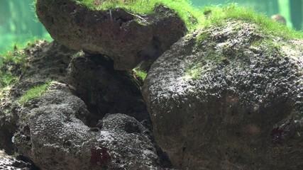 Rocks, Underwater, Aquariums