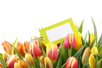 Tulpen Freisteller mit Karte