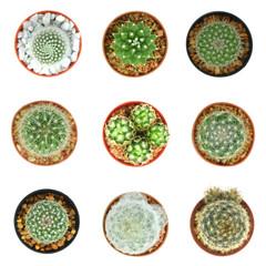 cacti top view