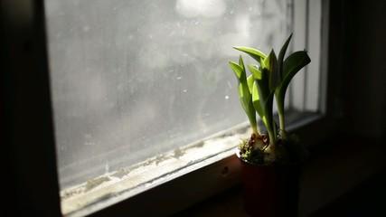 plant on the window, defocus blur