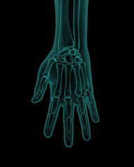 front x-ray view of human hand