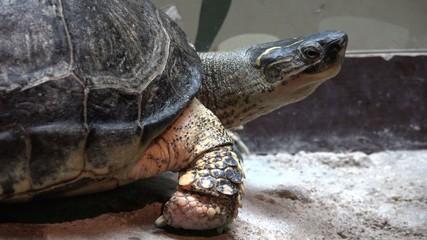 Turtles, Tortoises, Reptiles, Animals, Wildlife