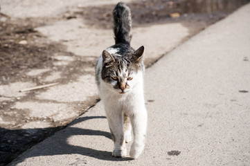 Young alley cat walking on asphalt road