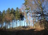 Mischwald unter blauem Himmel