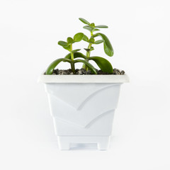 Small plant in pot