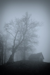 Home under beech in the Carpathians