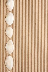Sea shells  lie on the sand