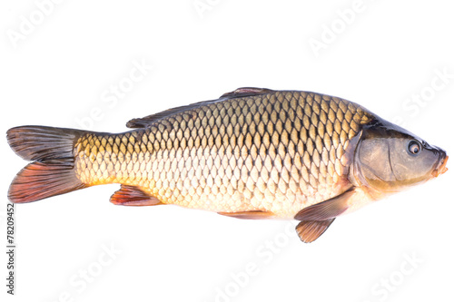 Fish carp - 78209452