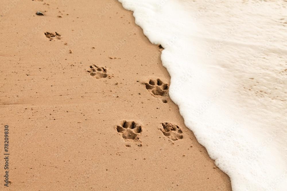 foto auf acrylglas paw prints in the sand nikkel. Black Bedroom Furniture Sets. Home Design Ideas