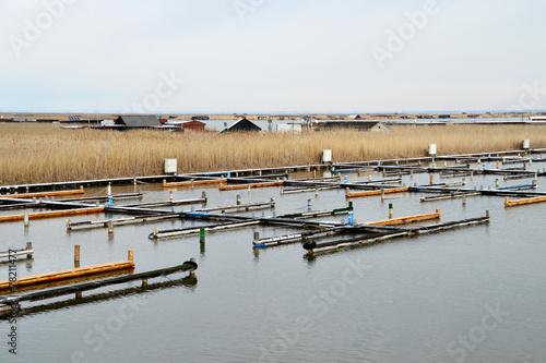 canvas print picture Yachthafen am Neusiedler See im Winter