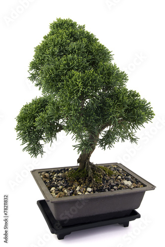 Fotobehang Bonsai Juniperus bonsai on white background