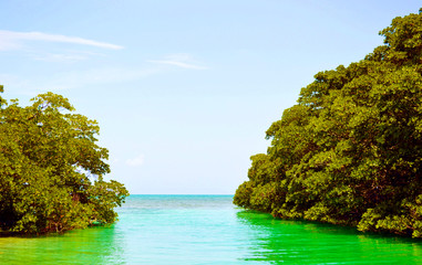 Marine jungle  and the emerald sea