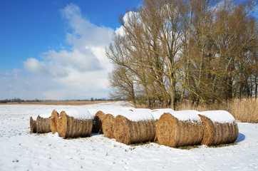 Winter meadow with straw bales