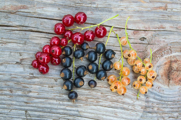 Red, black and yellow currant