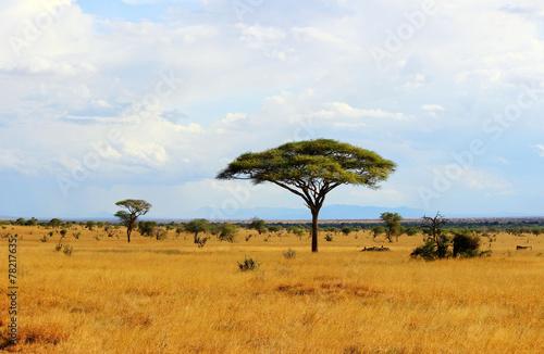 Savanna landscape Photo by Maciej Czekajewski