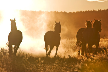 A herd of horses at dawn