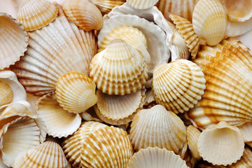 sea shells and sand