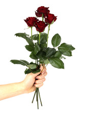 roses in hand isolated on white