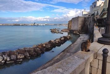 Otranto gatto