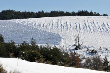 colline de lavande enneigée
