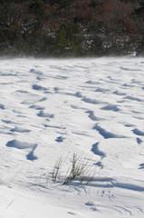neige soufflée par le vent