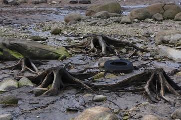 pneu usagés au milieu des racines
