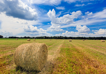 hay rolls at summer time