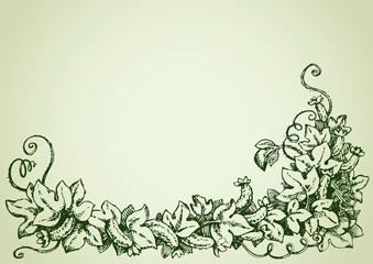 Cucumber vine. Vector drawing
