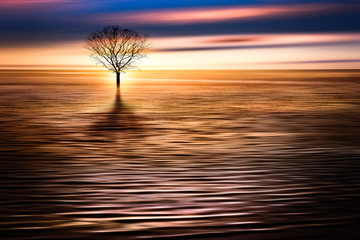 Sunrise seascape with a lone flooded tree