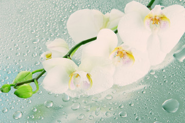 Beautiful orchids with drops close-up