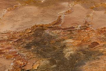 Bacteria Background