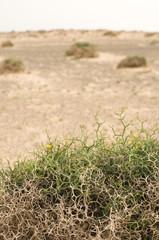 Wüstenpflanzen @ miket