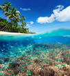 Coral reef in tropical sea. - 78236057