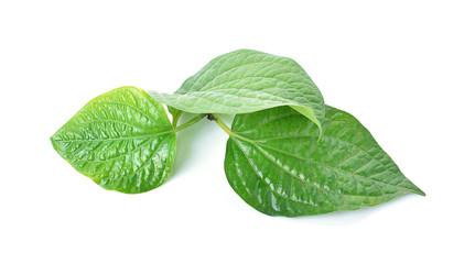 Betel leaf isolate on white background