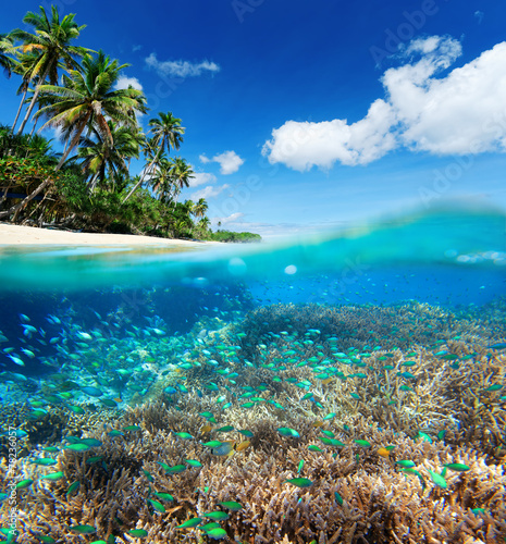Poster Koraalriffen Coral reef in tropical sea.